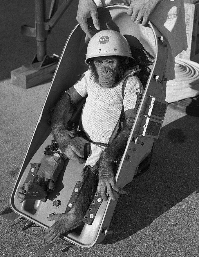 Ham was NASA's test subject to see if humans could survive in space.