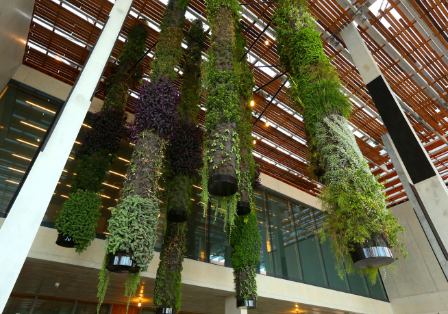 Hanging gardens by Patrick Blanc showcase eighty heat and hurricane resistant plants throughout the building.