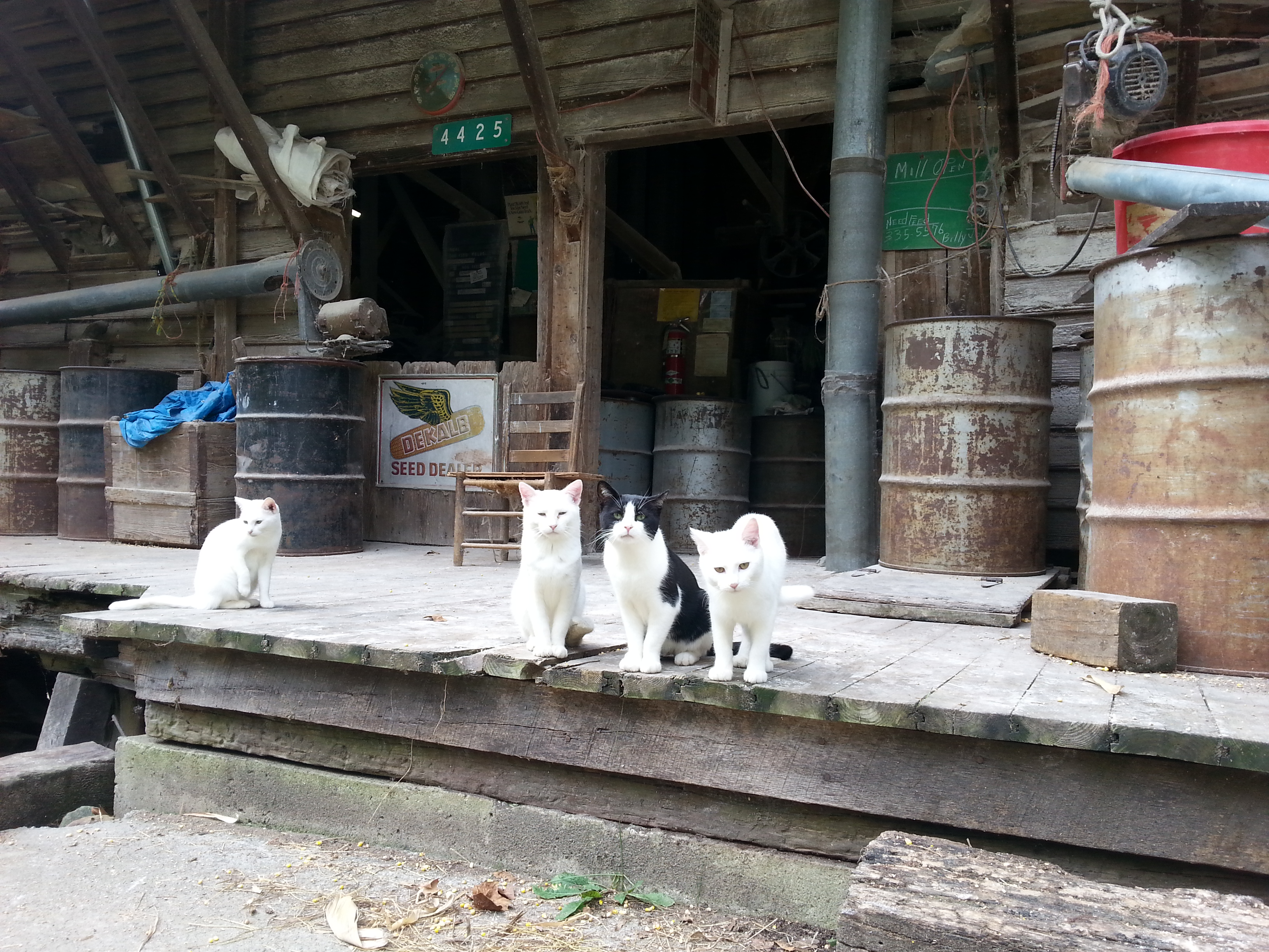 A few felines visiting the mill.
