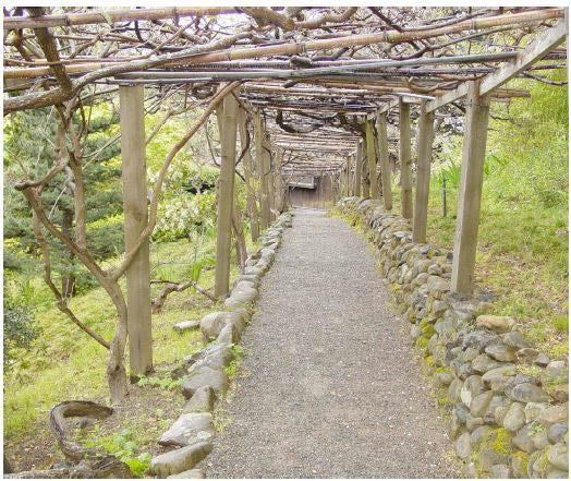 Wisteria Arbor (image from National Register of Historic Places)