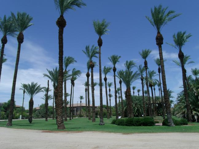 Over 11 different species of palm trees were planted. Some of the trees on the property are over 100 years old.