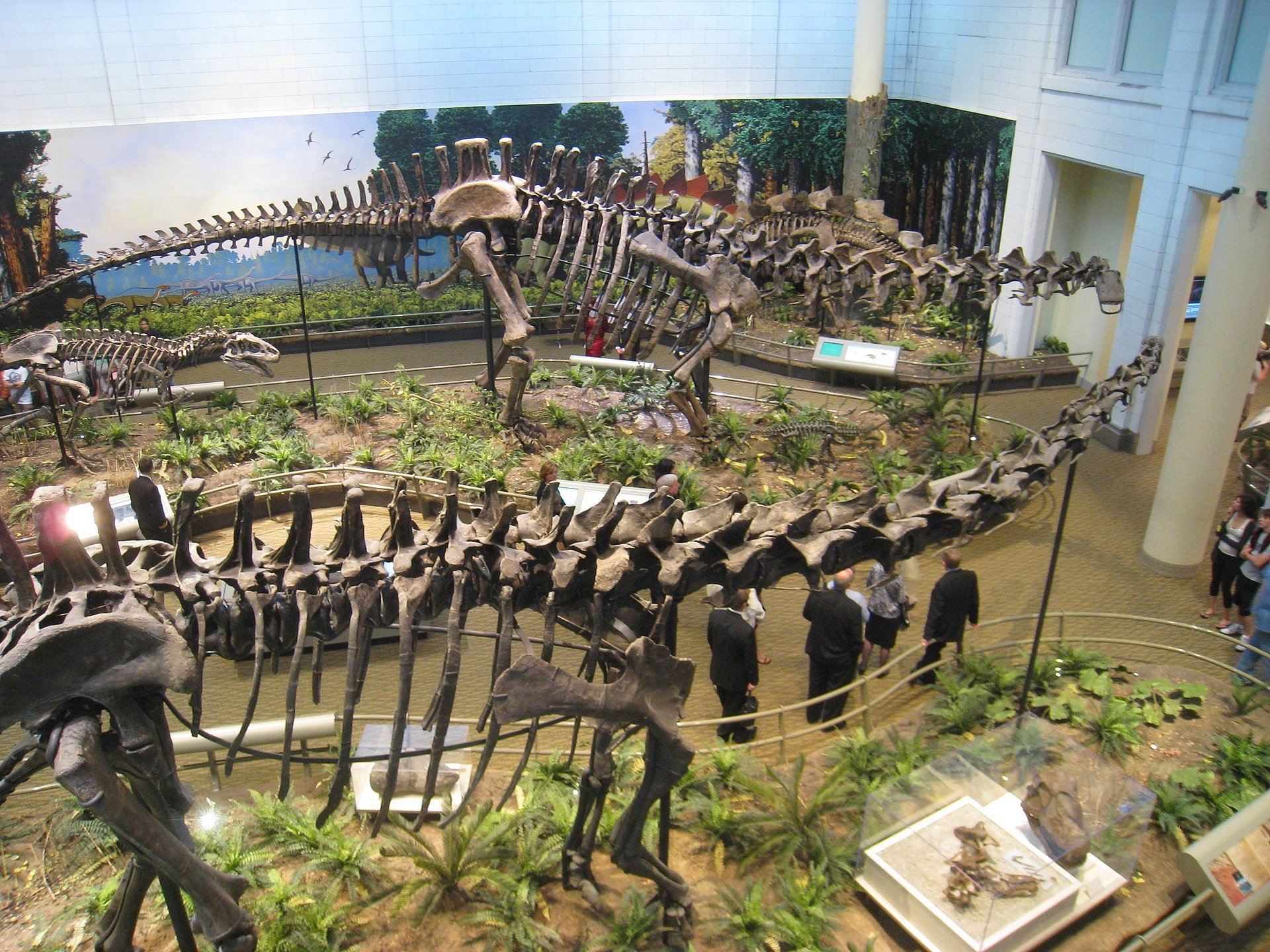 Dinosaurs in Their Time is a popular exhibit, featuring Diplodocus carnegii, named for the Carnegie Museum expedition that discovered the specimen.