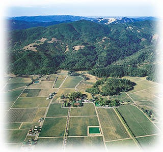 Inglenook Winery, aerial view (1995)