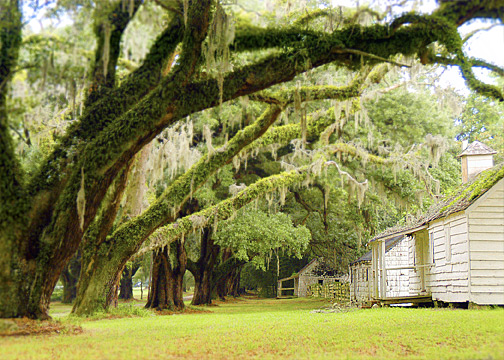 Some of the slave quarters  Credit: Namey Design Studios (via Wikipedia)