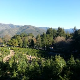 Patchen California Christmas Tree Farms (image from Yelp)