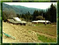 The site of Patchen (image from Patchen California Christmas Tree Farms)