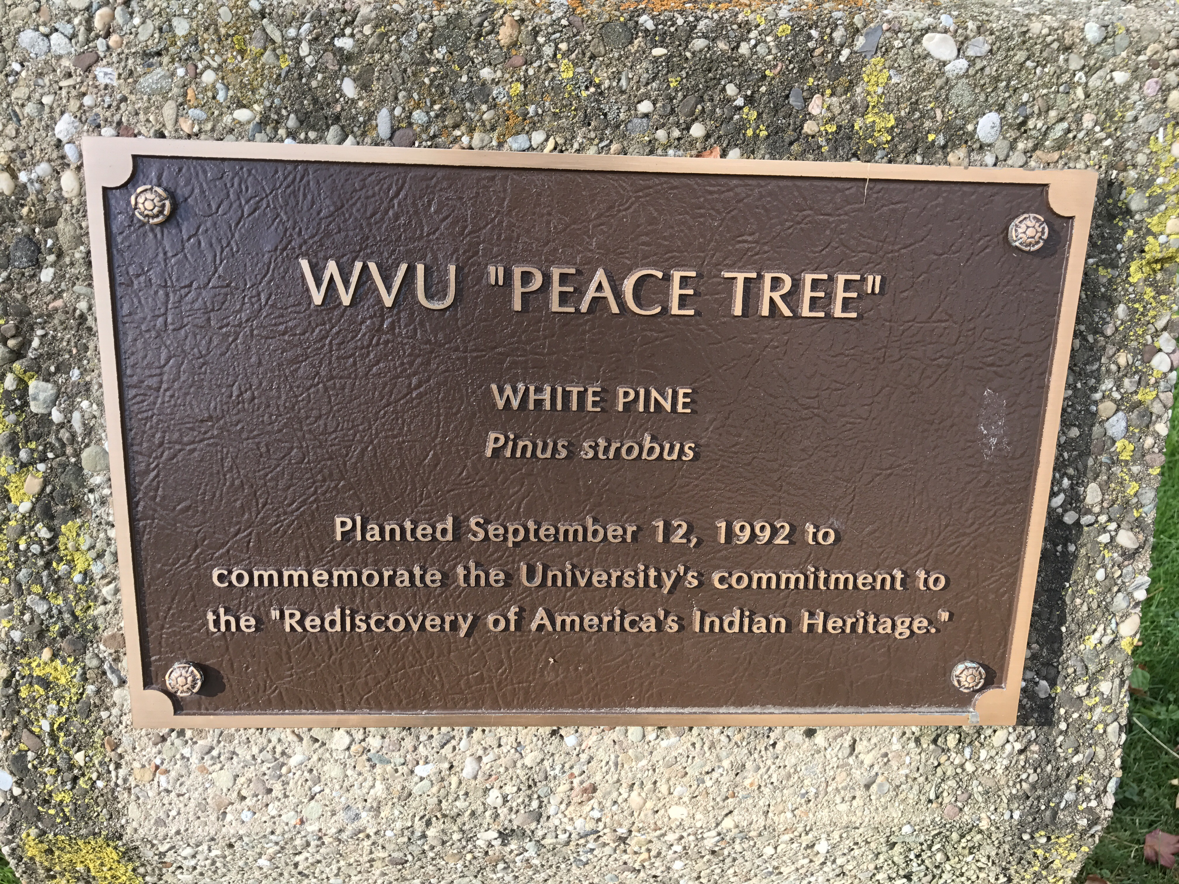 Plaque commemorating the Peace Tree.