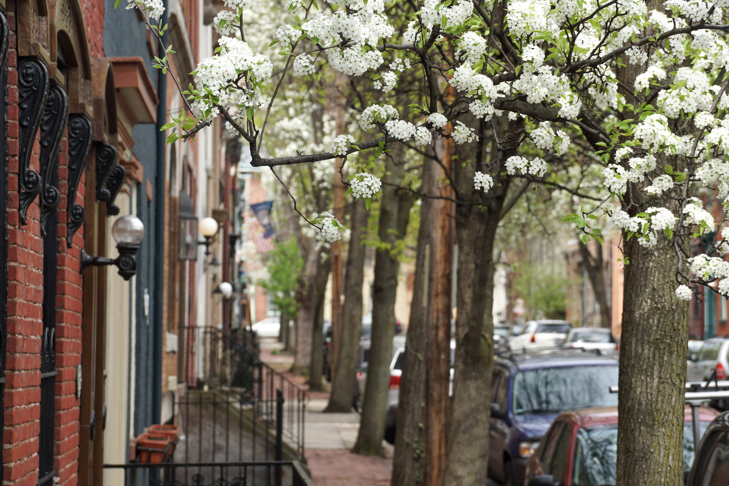 Trees in bloom along a street in the district.