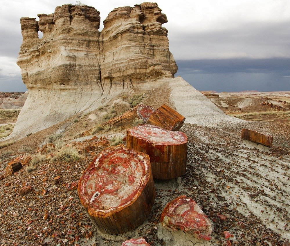 The petrified trees in the park are 225 million years old and are widely dispersed in the park.