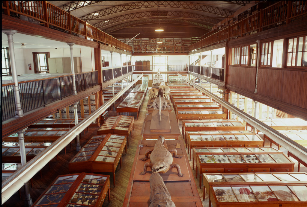 The second-floor science museum looks largely as it did after it was reorganized by Dr. Joseph Leidy in 1891.