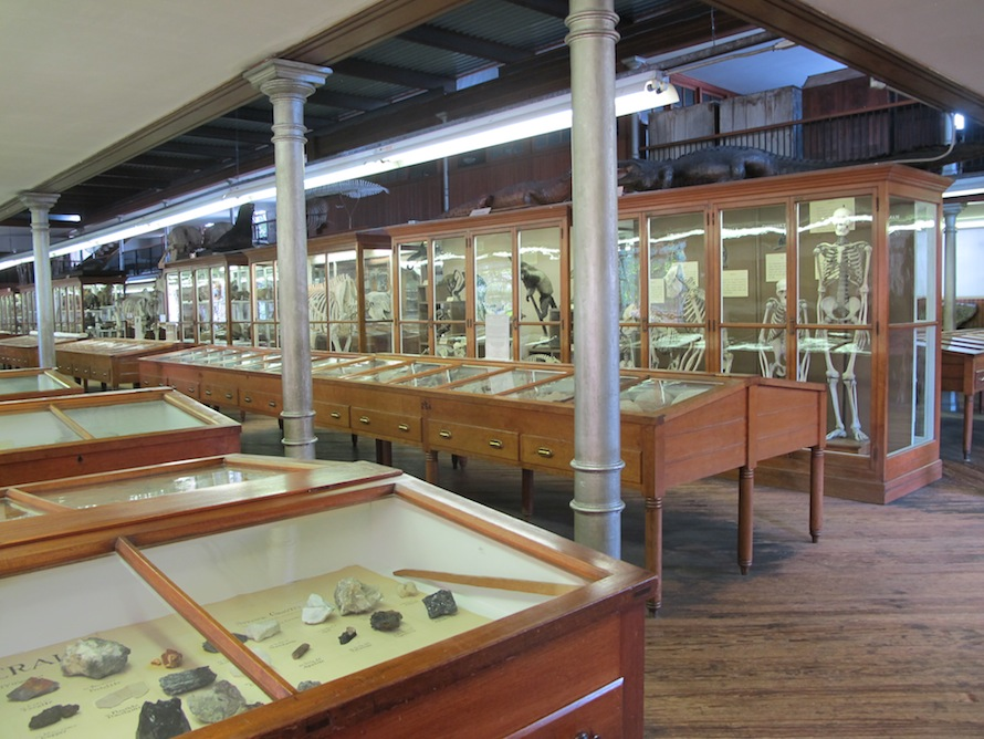 A closer look at the display cases that house most of the museum's specimens, to include numerous mounted skeletons and fossils.