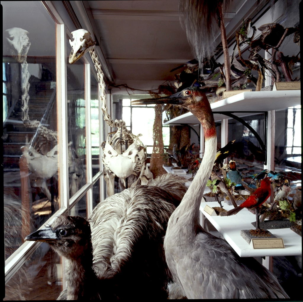 A behind-the-scenes look at part of the institute's avian collection when not on display.