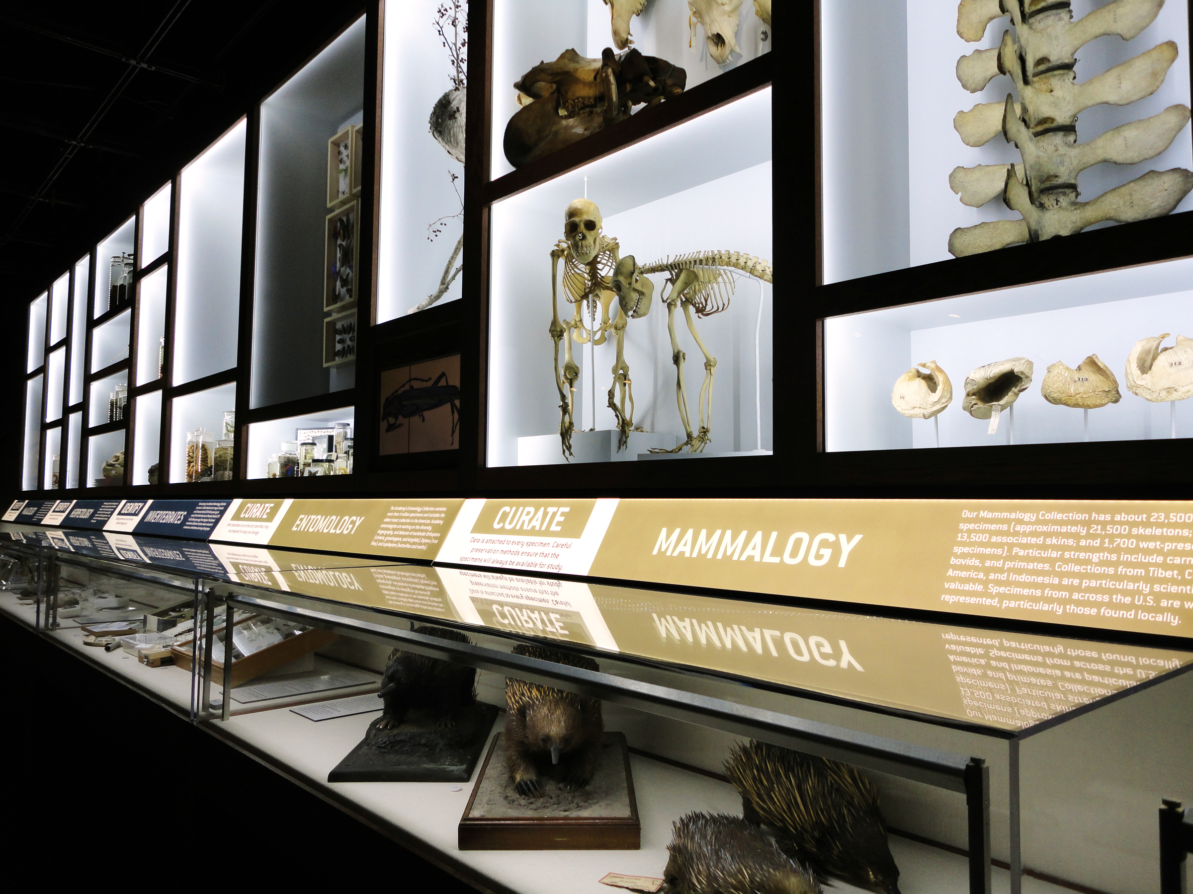 Just a few of the over 17 million specimens that the academy has to choose from are on display here.