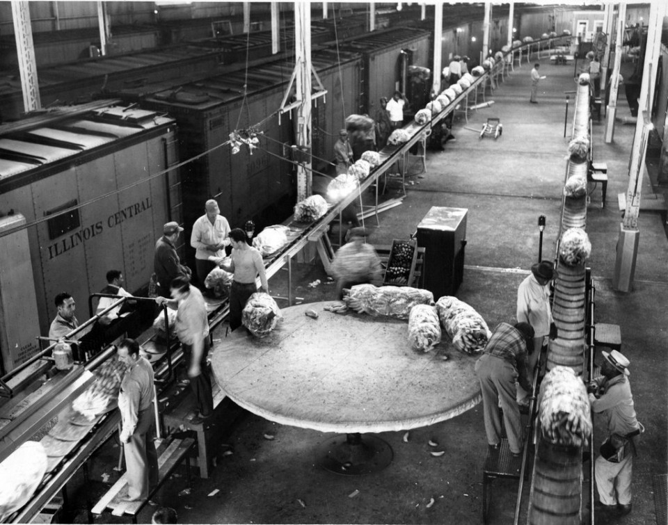 New Orleans workers prepare bananas for shipment throughout the US at the Poydras Street Wharf in 1957.