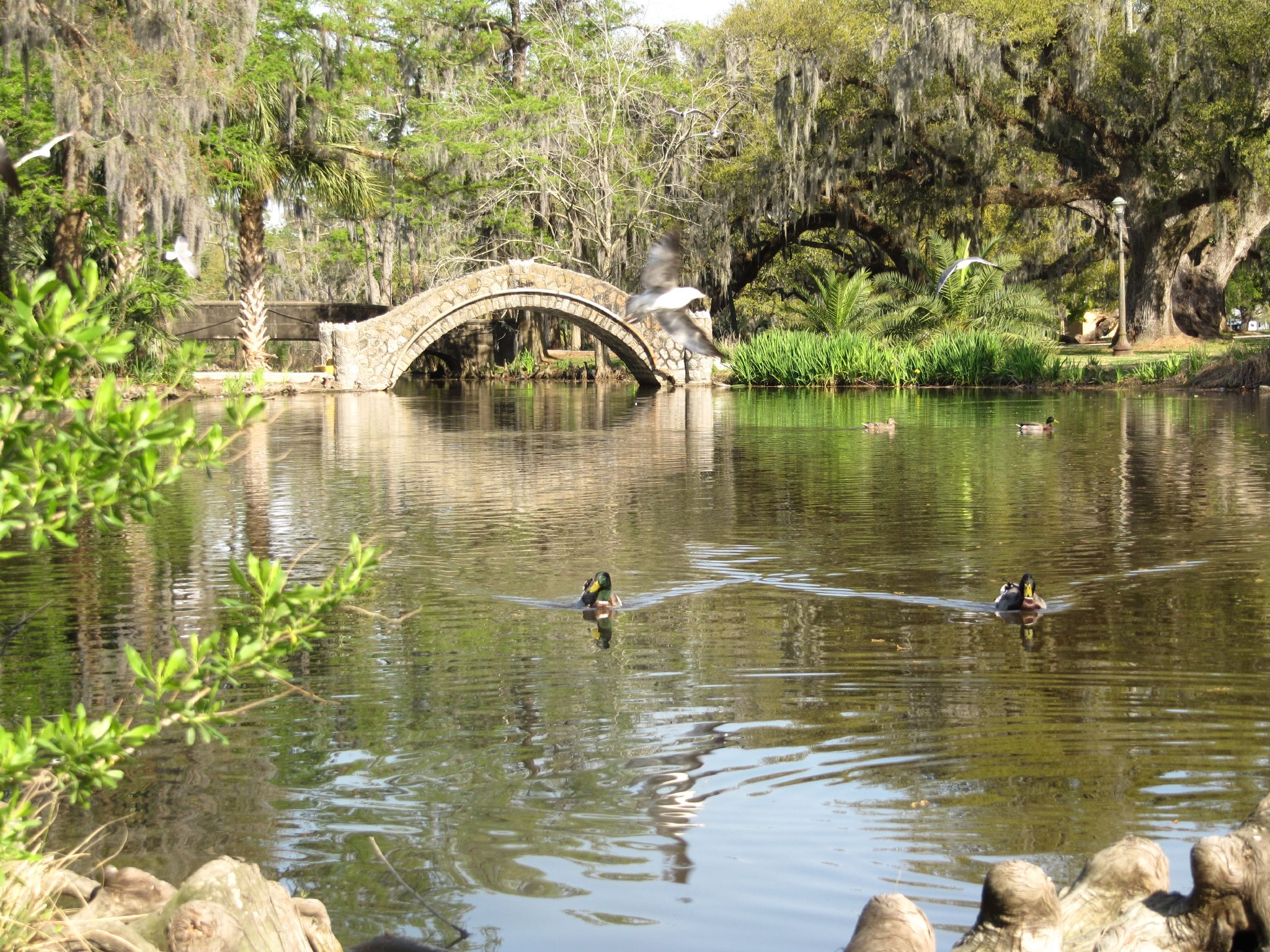 The picturesque arched Langles Bridge crosses one of City Park's numerous lagoons.
