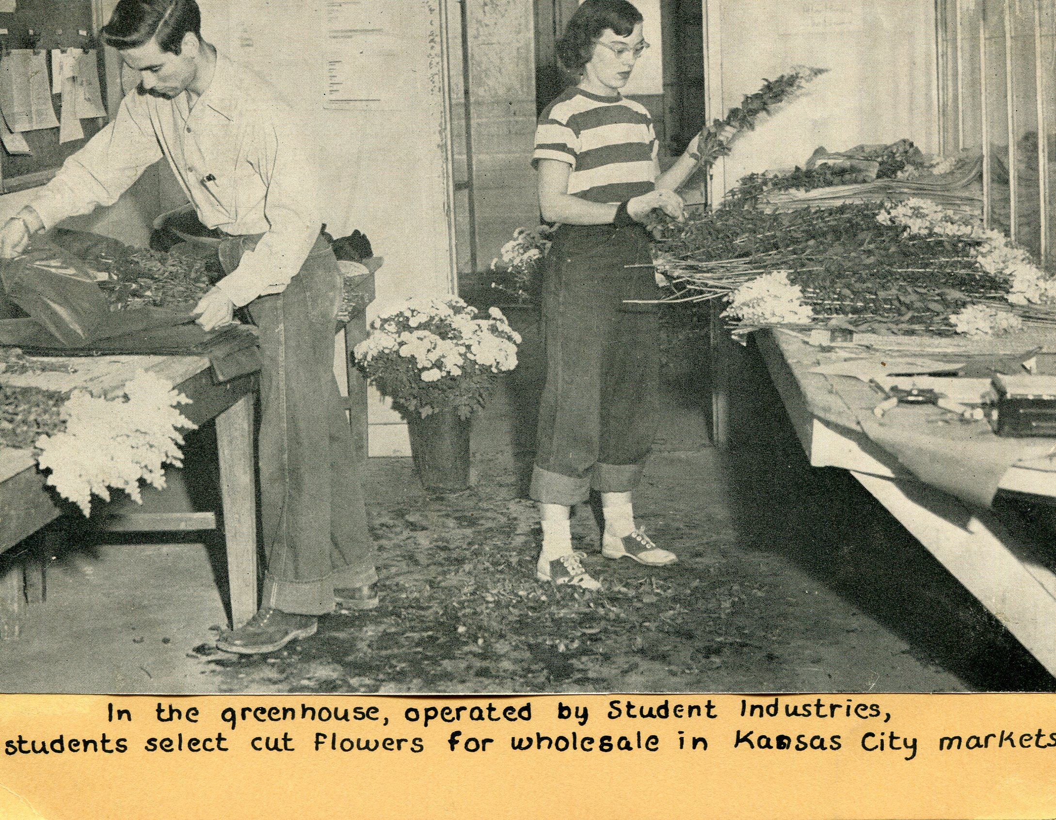 A photo inside Park Greenhouse of students cutting flowers for sale in local markets.