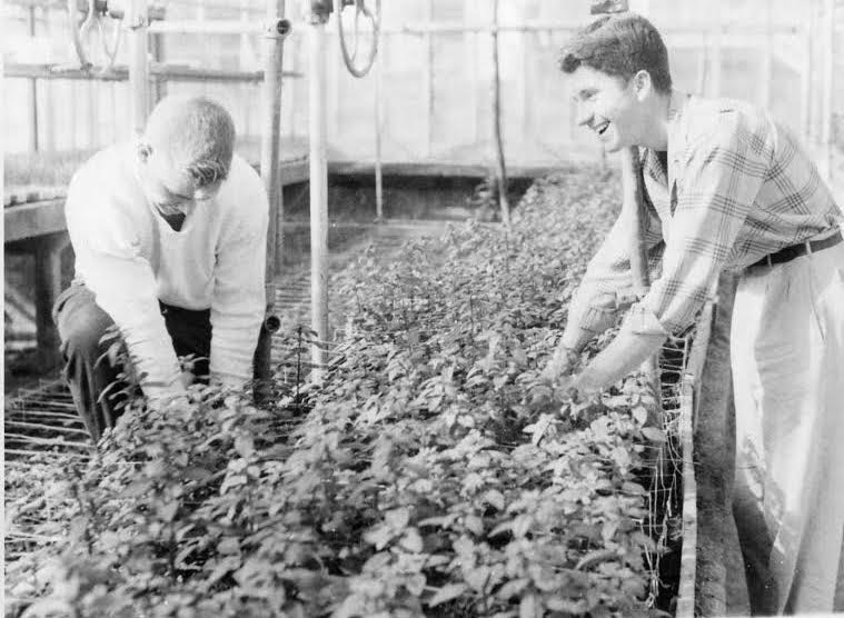 Students working in the greenhouse.