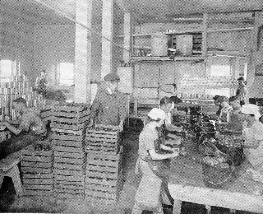 Photo taken in the Canning Factory, 1920