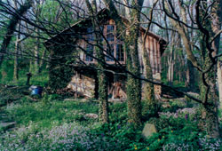 The Hubbards' Home at Payne Hollow