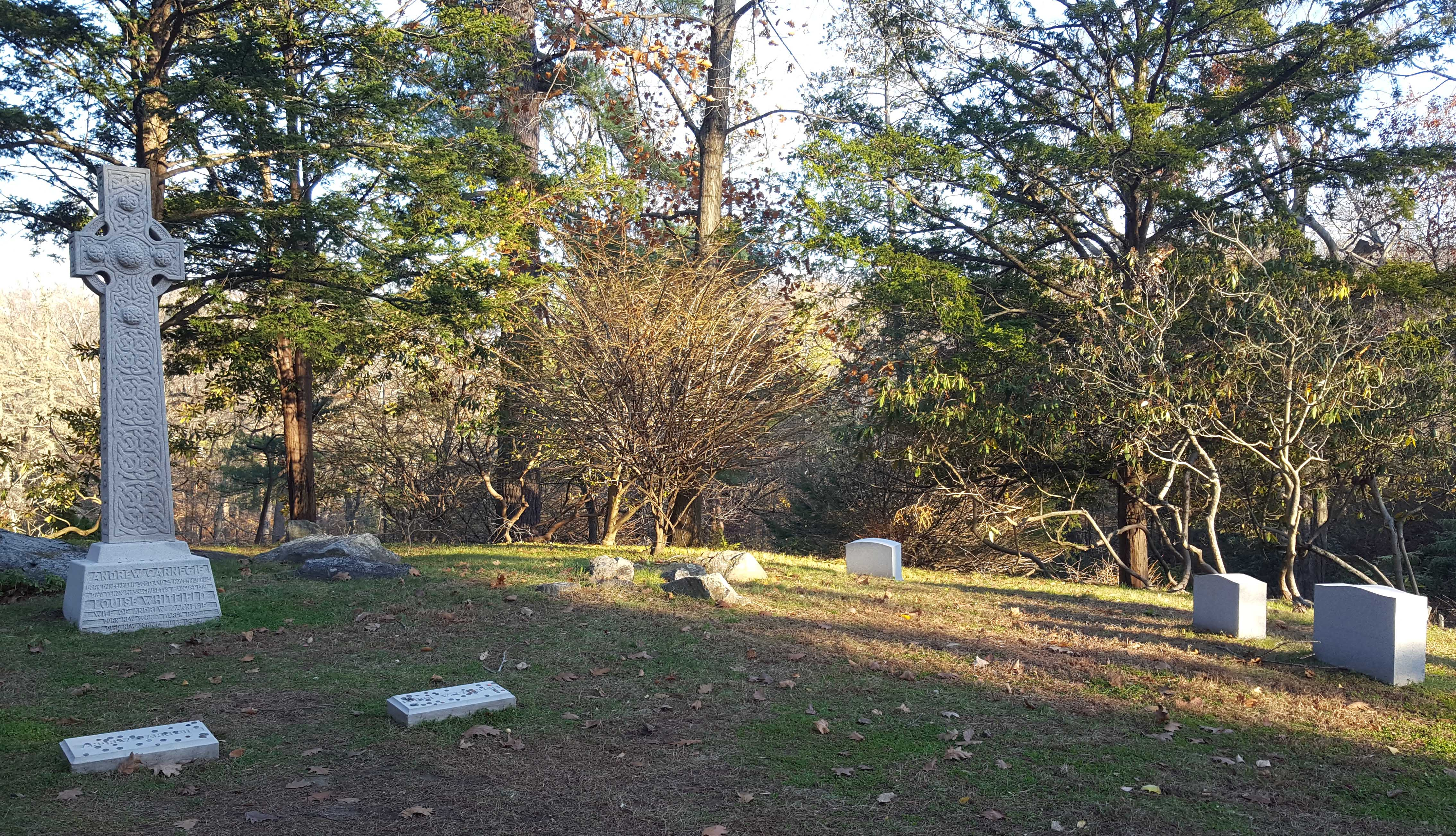 Tree, Property, Land lot, Woody plant