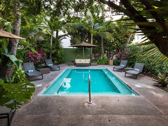 The Essex House's pool in a tropical setting.