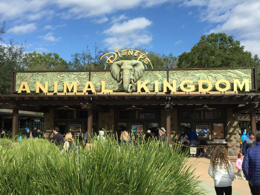 Entrance To Disney's Animal Kingdom
