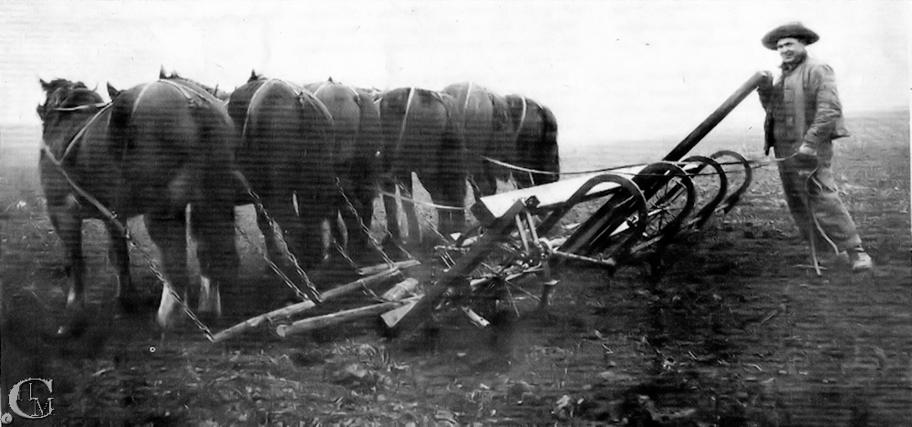 The rotary rod weeder being pulled by a team of horses.