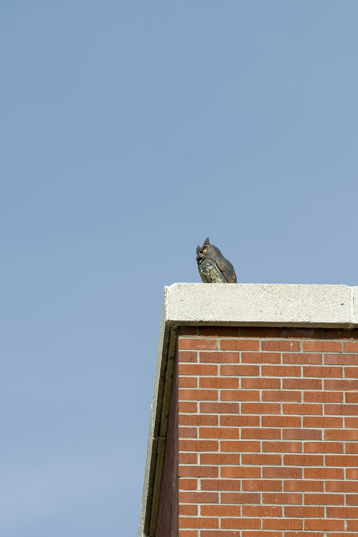 The fake owl located in the southeast corner of the library was added when the 1995 addition was finished. The owl's purpose is to keep the pigeons away.