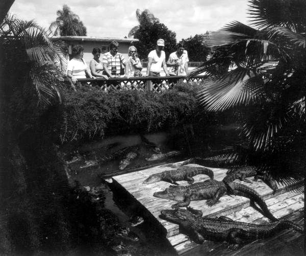 Tourists observing the Alligators in 1979.