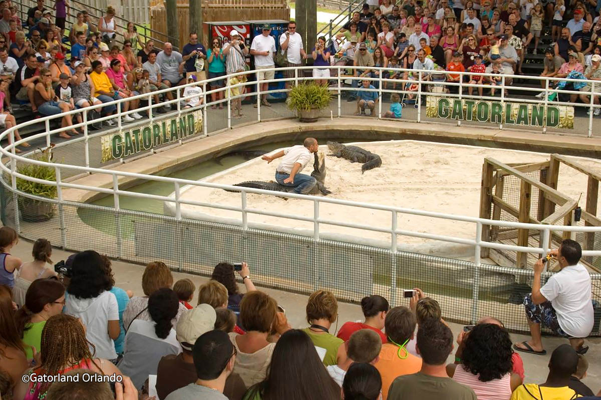 Recent photo of a show Gatorland provides for visitors.