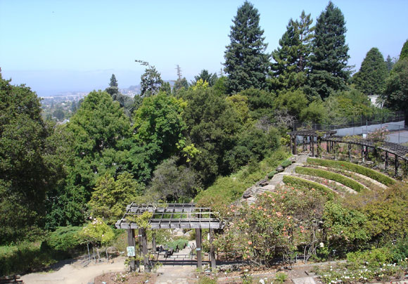 Berkeley Municipal Rose Garden Overview (2010)