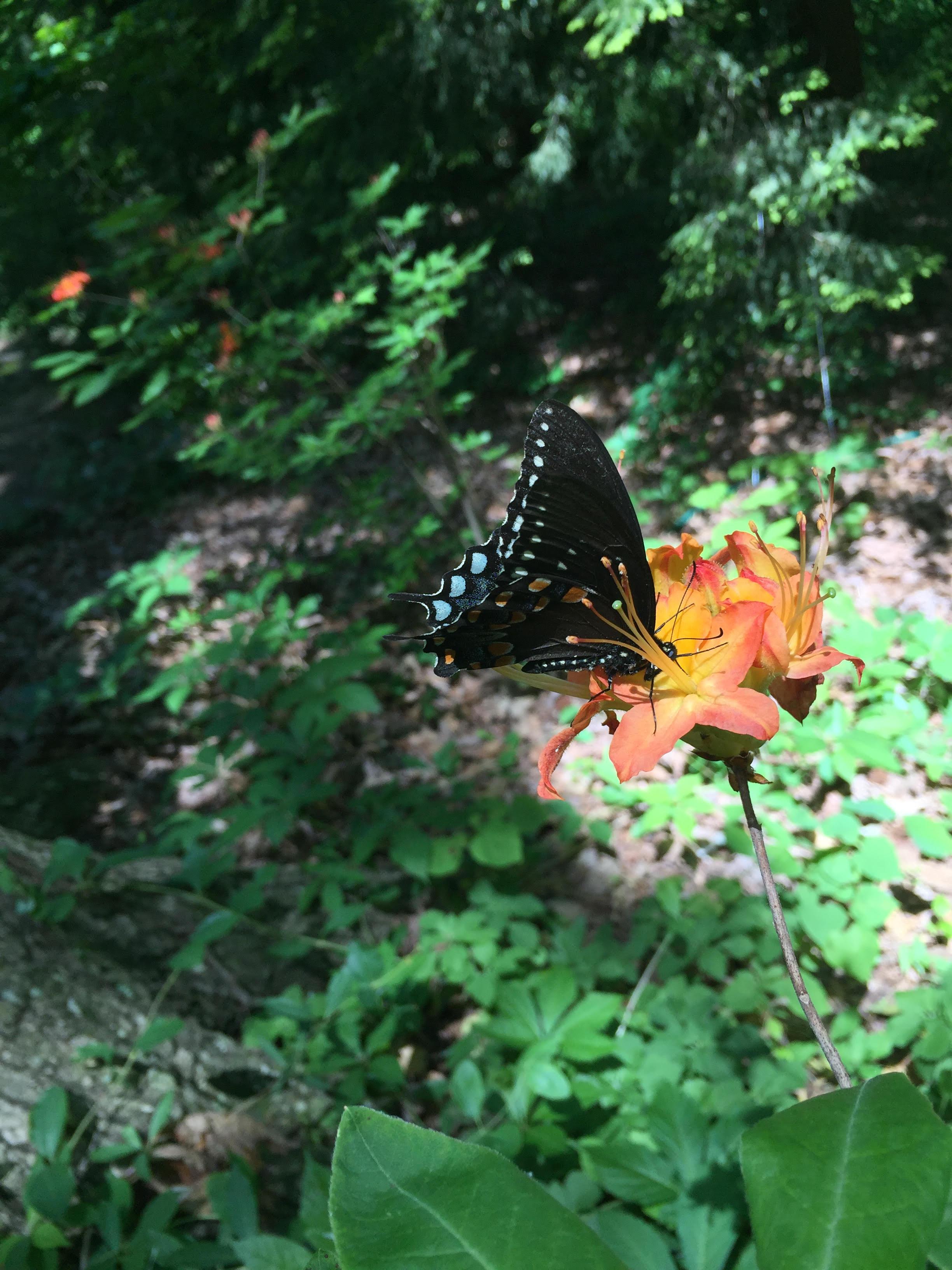 Plant, Pollinator, Butterfly, Arthropod