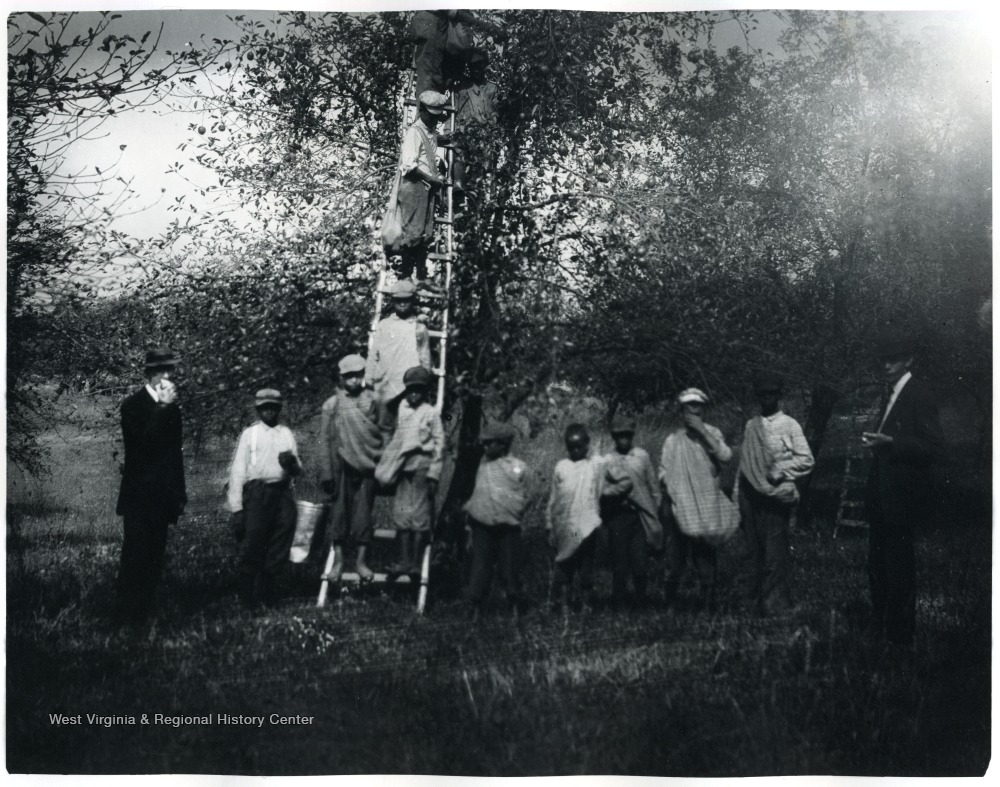 Boys of the Colored Orphans Home picking apples