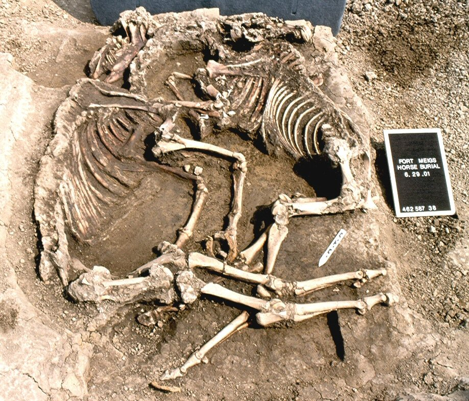 On display in the conflict area of the museum, visitors can see the two horse skeletons found on Fort Megs's ground.