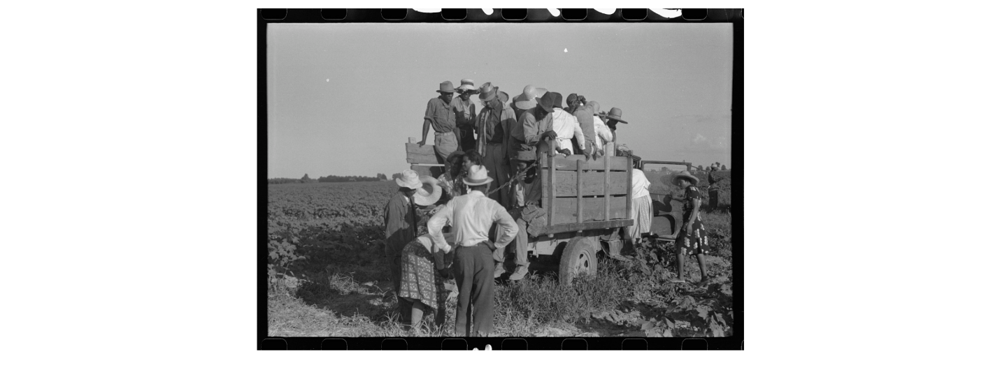 Hopson plantation was one of the first plantations to use pick ups to move cotton and farm hands to different parts of the field