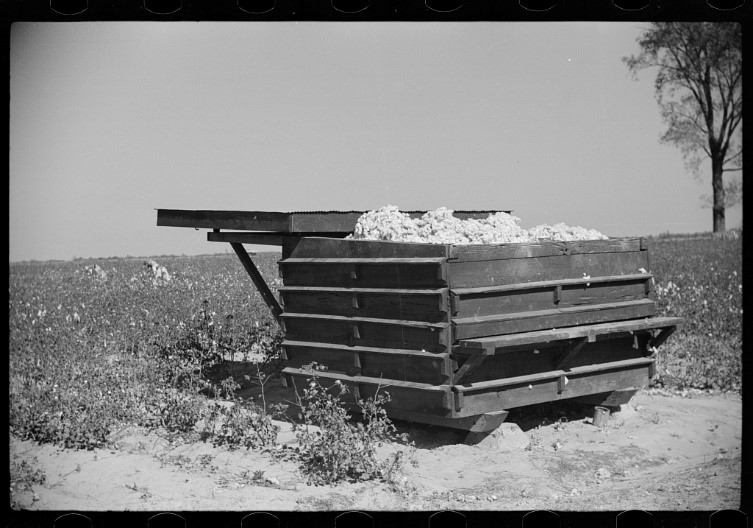 New-type cotton house where cotton is stored in field until enough is picked to be taken to gin in wagon loads, Hopson Plantation, Clarksdale, Mississippi