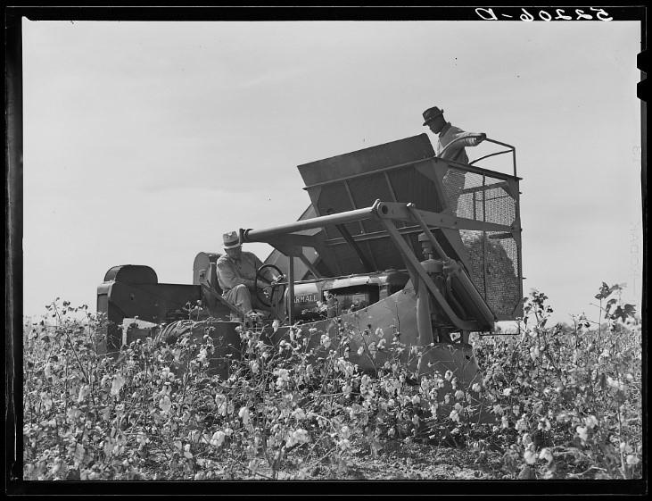 International cotton picker in cotton field on Hopson Plantation, near Clarksdale. Mississippi Delta, Mississippi