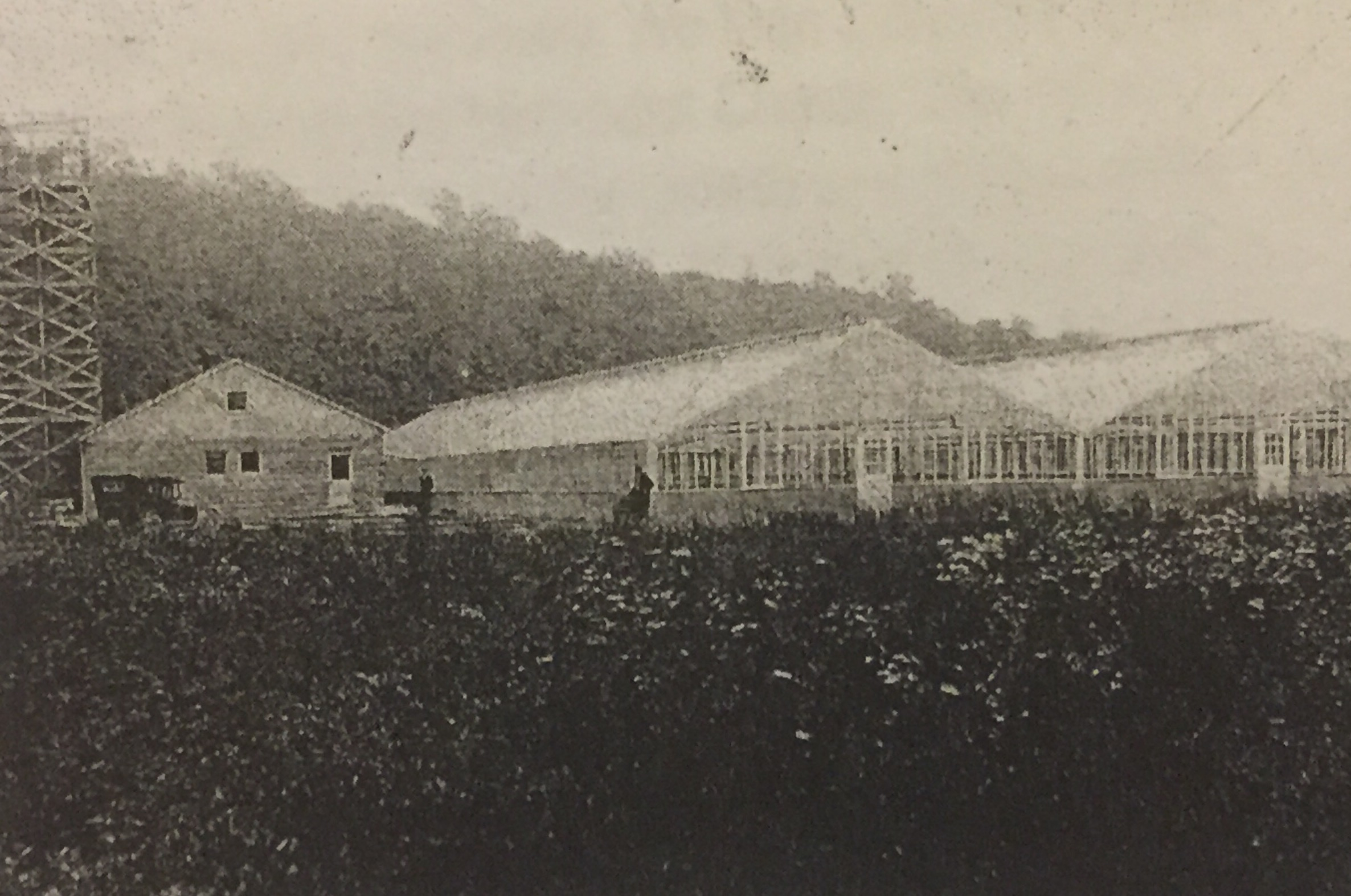 Greenhouse in South Point, Ohio