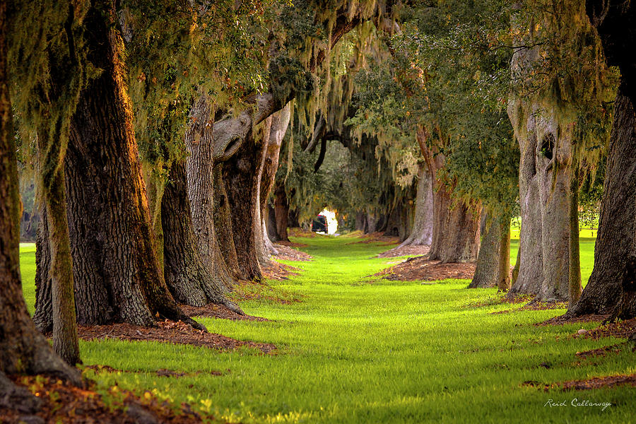 The Avenue of the Oaks