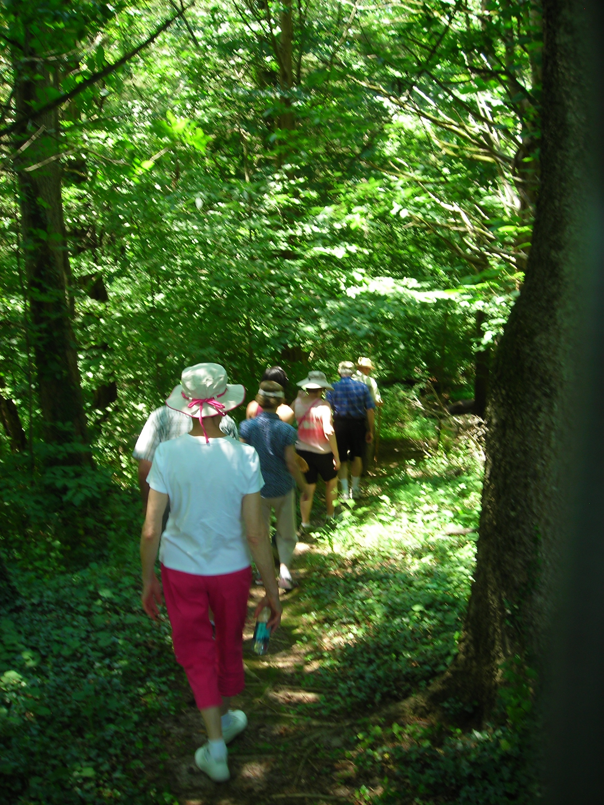 Woodland Hike walk