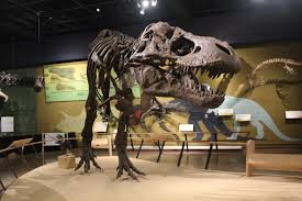 The museum displays skeletons such as this T-Rex and many other specimens and artifacts.