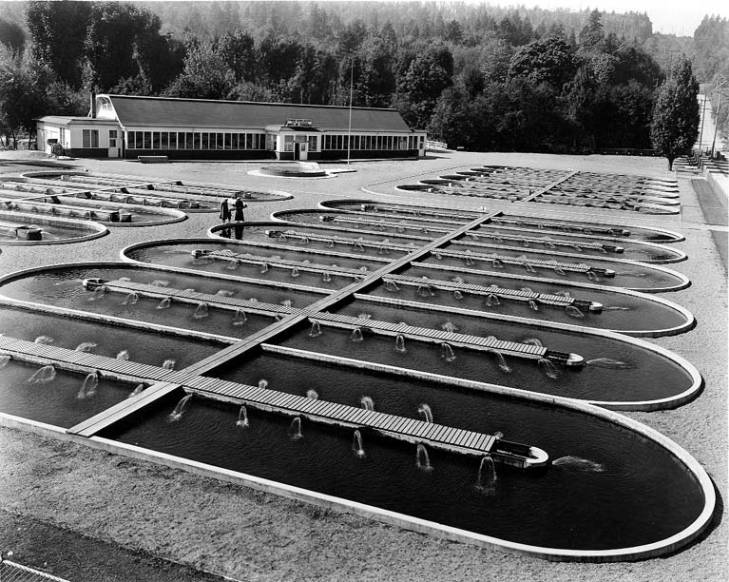 Issaquah Fish Hatchery circa. 1936