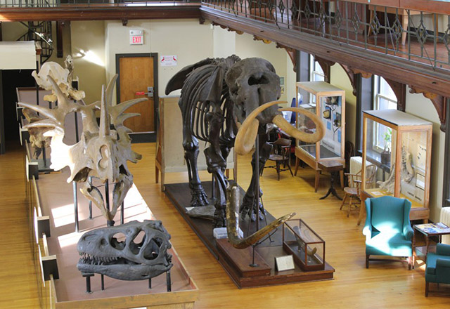 Museum interior (image from Rutgers University Geology Museum)