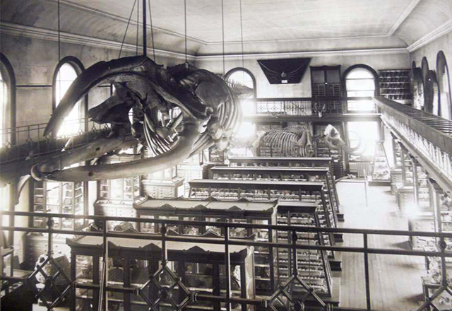 Historic image of the museum (image from Rutgers University Geology Museum)
