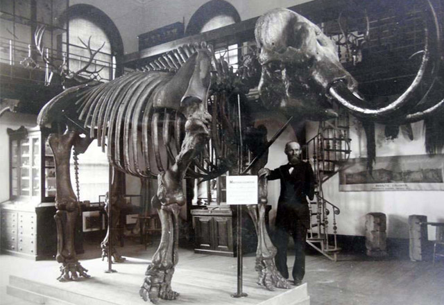 William S. Valiant with the Mannington Mastodon (image from Rutgers University Geology Museum)