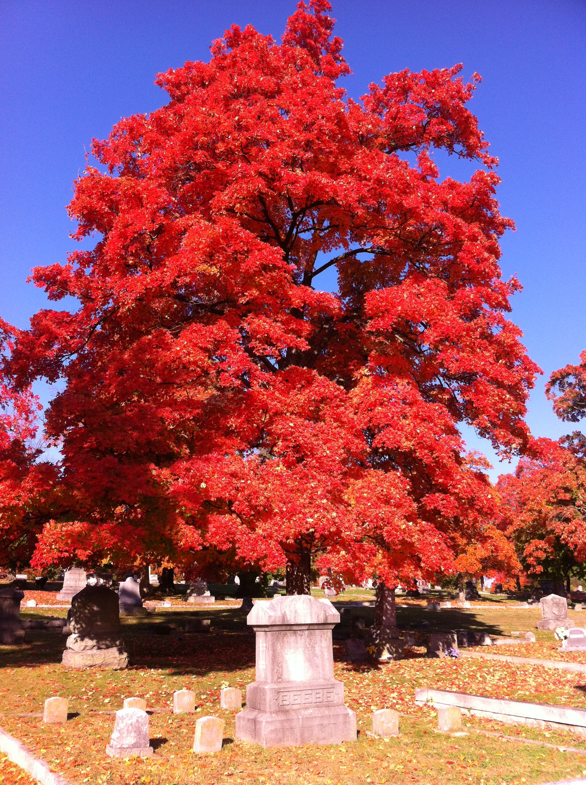 Park Cemetery is full of old trees and is a great spot to view fall color that Carthage is known for throughout the region. An annual festival (3rd Saturday of October) is called Maple Leaf Festival and takes place throughout town.