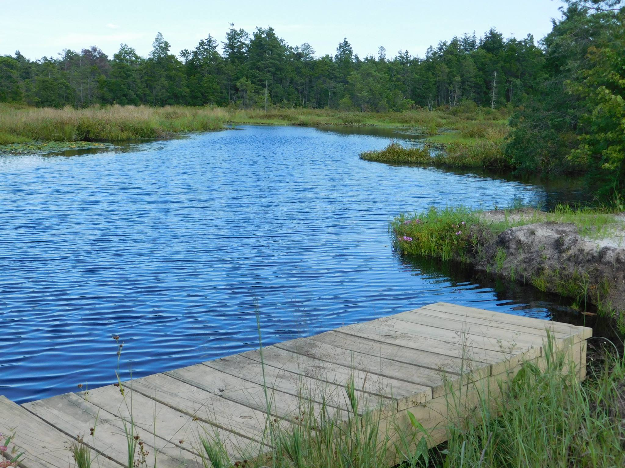 A variety of nature trails lead through the Pine Barrens woodland past ferns, moss, cedar, mountain laurel and out along the edges of waterways, blueberry and cranberry fields that stretch for miles.