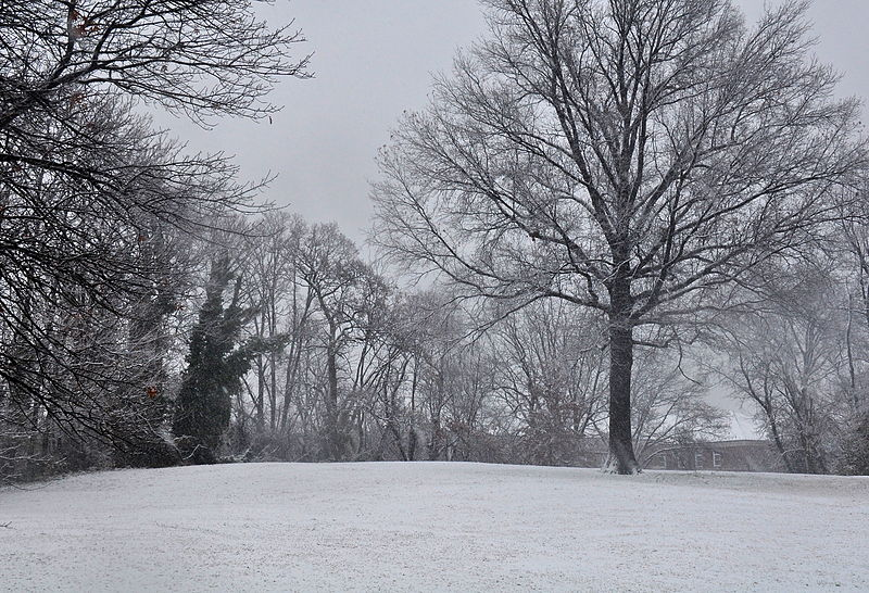 The Landmark is Located on the Ground just to the Left of this Tree. The Photgraph was taken Facing South. The Landmark is a small brass circular plaque on the ground.