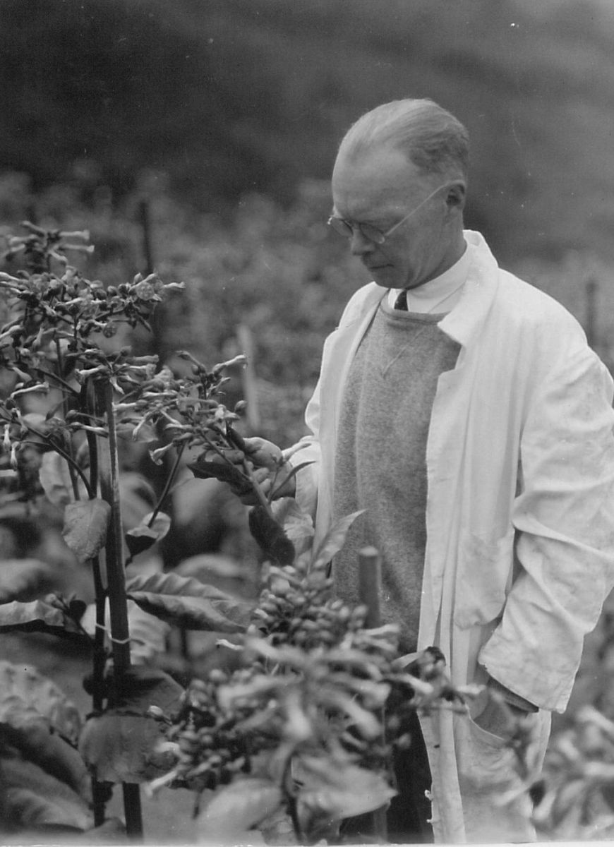 Curator, Thomas Goodspeed, was appointed Director of the UC Botanical Garden in 1934