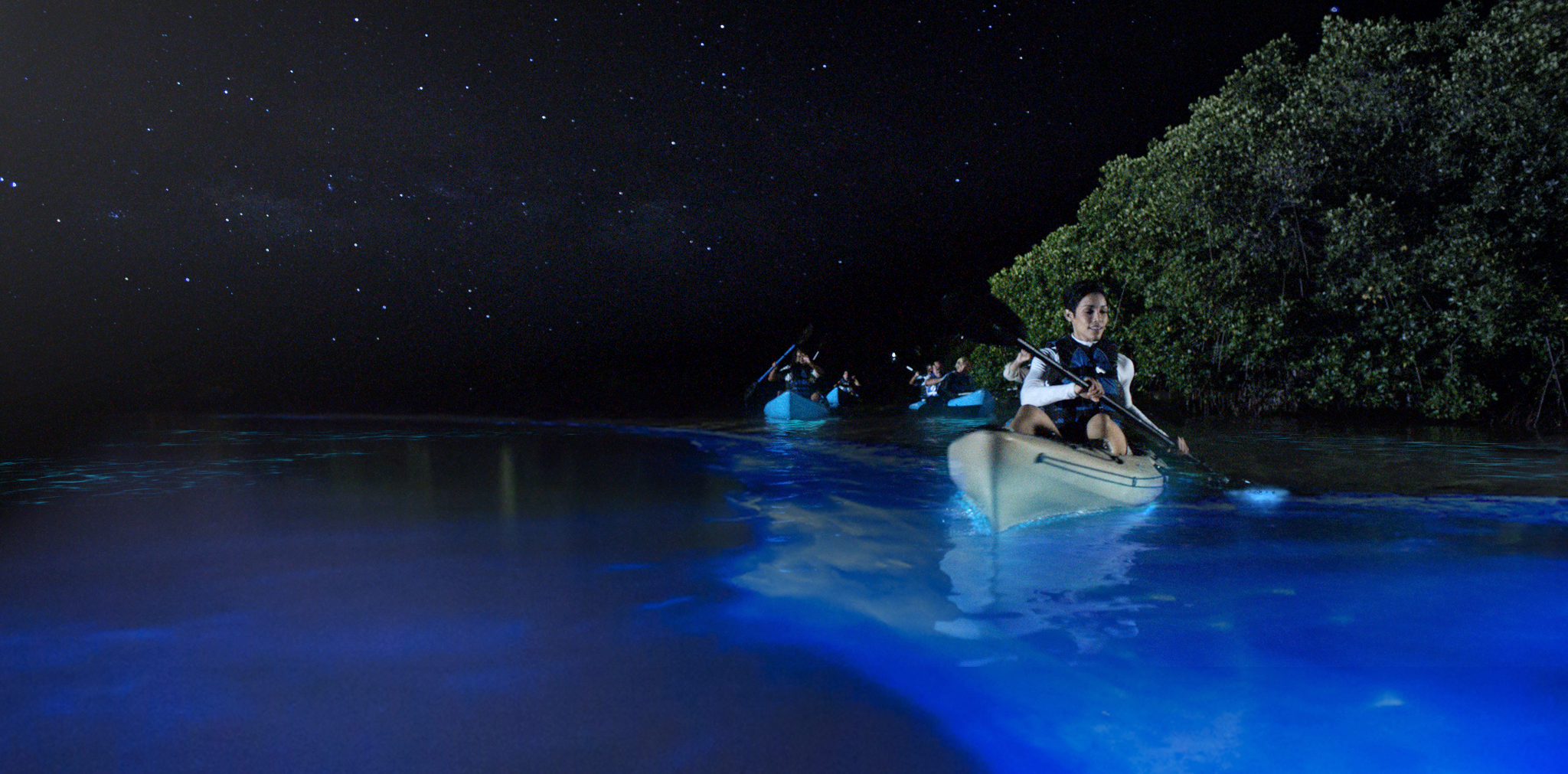 In Mosquito Bay, visitors can participat in various activities. The most famous is kayaking in the bioluminescent waters.